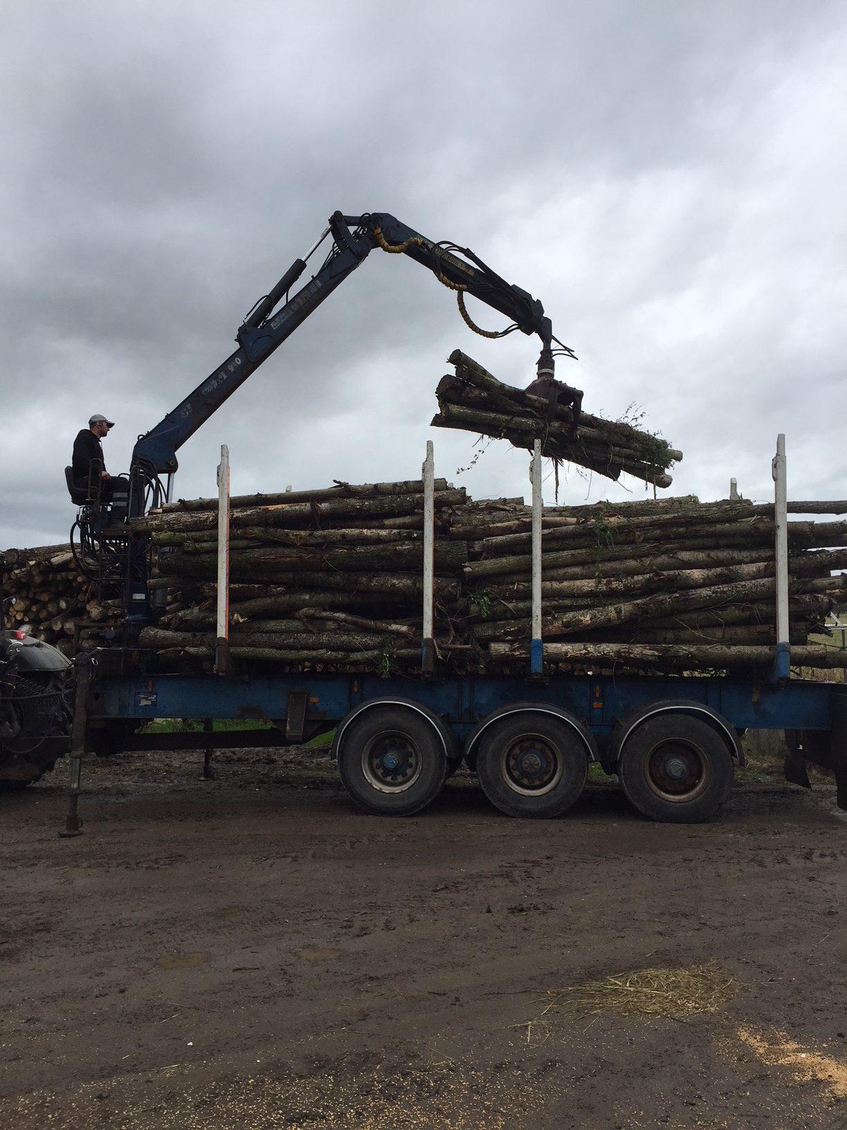 Timber trailer 2