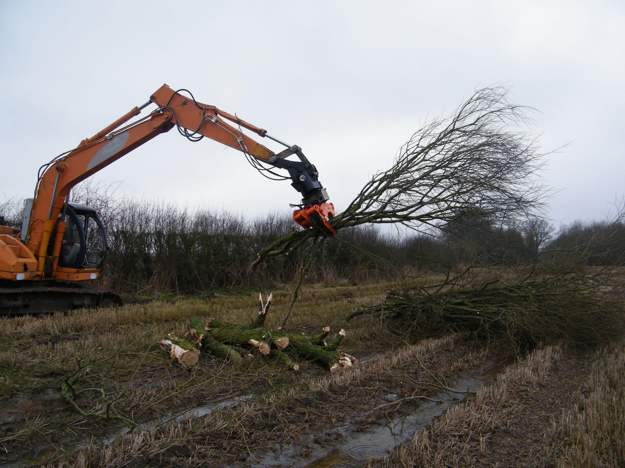 Tree Shear 7